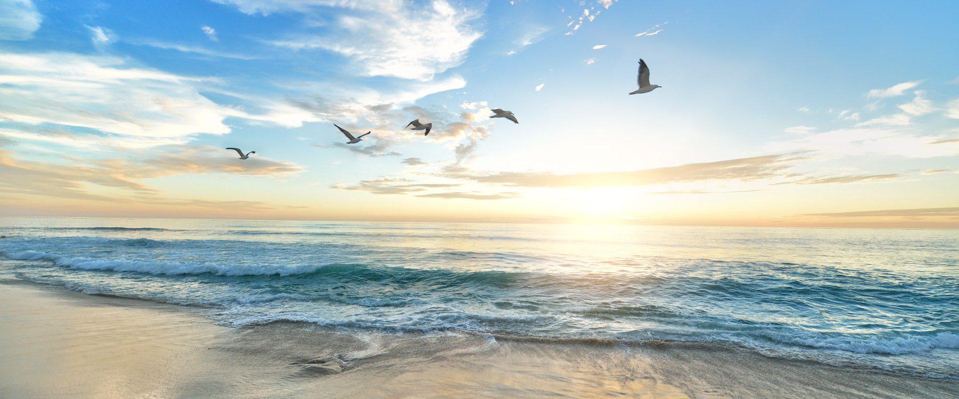 Camping La Vie : Ocean